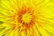 Blooming Digital Art Prints - Bloom Of Dandelion Print by Michal Boubin