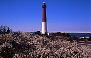 Barnegat Lighthouse Framed Prints - Blooming Barnegat Framed Print by Skip Willits