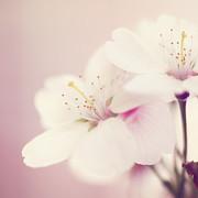 HJBH Photography - Blossom