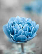 Silver Turquoise Metal Prints - Blue Flower Metal Print by Frank Tschakert