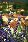 Tops Framed Prints - Blue flowers and rooftops in Sarlat Framed Print by Elena Elisseeva