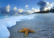 Beach Prints - Blue Foam starfish Print by Sean Davey