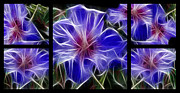 Digital Modified Prints - Blue Hibiscus Fractal Print by Peter Piatt