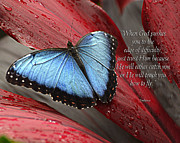 Diane E Berry - Blue Morpho 2