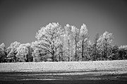 Robert Hellstrom - BnW Winter