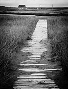 Reeds Photos - Boardwalk Through the Dunes by Edward Fielding