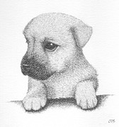 Pup Drawings Framed Prints - Bonnie Framed Print by Conor OBrien
