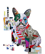 Portraits Of Pets Art - Boston Bulldog  by Brian Buckley