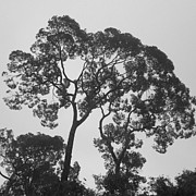 Black And White Rural Photography Prints - Branch Print by Setsiri Silapasuwanchai