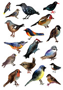 Wildfowl Prints - British Birds Print by Lydia Irving