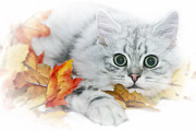 Autumn Scene Digital Art Framed Prints - British Longhair Cat Framed Print by Melanie Viola