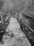 Michelle Lawrence - Broken Bridge