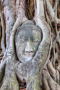 Statue Portrait Metal Prints - Buddha Head in Tree Metal Print by Fototrav Print