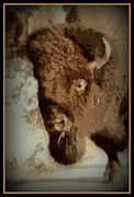 Buffalo  Print by Ernie Echols