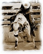 Bull Riders Framed Prints - Bull Rider Framed Print by Roland Stanke