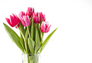 Bunch Of Pink Tulips Print by Stephen Cordory