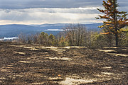 Burnt Blueberry Field In Maine Print by Keith Webber Jr