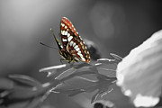 Cheryl Young Metal Prints - Butterfly Metal Print by Cheryl Young