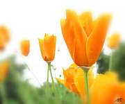One Planet Infinite Places Digital Art - California Poppies by Steve Huang