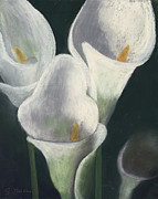 Close Up Floral Pastels Posters - Calla Lilies Up Close Poster by Ginny Neece