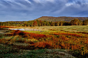 Thomas R Fletcher - Canaan Valley State Park