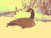 Geese Pyrography Framed Prints - Canadian Goose Framed Print by Larry Campbell