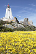 Western Cape Prints - Cape Columbine Lighthouse Print by Neil Overy