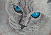 Persian Cat Pastels Posters - Cats Eyes Poster by Amber Nissen