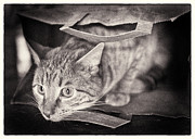 Blank Greeting Card Prints - Cats In The Bag 1 Print by Patrick M Lynch