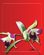 Cattleya Posters - Cattleya Triage dafoi Art 3 of 3  Poster by Ruth  Benoit