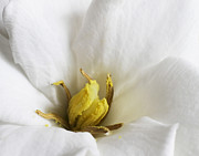 Gardenia Photos - Center of Attention by David and Carol Kelly