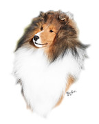 Sable Sheltie Posters - CH PaRays Ka-2 Poster by Chris Lynch