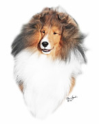 Sable Sheltie Posters - CH PaRays Ka-3 Poster by Chris Lynch