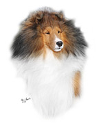 Sable Sheltie Posters - CH PaRays Ka-6 Poster by Chris Lynch