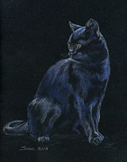 Kitten Pastels - Chat Noir by Jana Goode