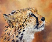 David Stribbling - Cheetah