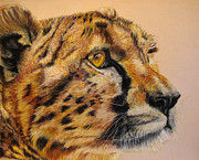 Big Cat Pastels Posters - Cheetah Gaze Poster by Ann Marie Chaffin