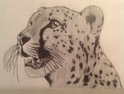 Cheetah Drawings Framed Prints - Cheetah Framed Print by Noah Burdett