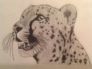 Cheetah Print by Noah Burdett
