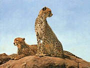 David Stribbling - Cheetahs