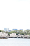 Patriotic Art - Cherry Blossoms - Washington DC - 011316 by DC Photographer