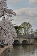 Cherry Blossoms - Washington Dc - 011328 Print by DC Photographer