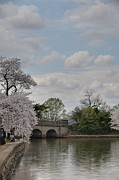 Holiday Prints - Cherry Blossoms - Washington DC - 011330 Print by DC Photographer