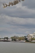 White Photo Prints - Cherry Blossoms with Jefferson Memorial - Washington DC - 01138 Print by DC Photographer