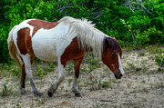 Michael Donahue - Chincoteague Pony