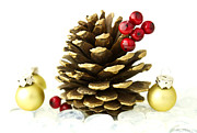 Pine Cone Photos - Christmas by Blink Images