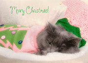 Kitty Cat Photo Prints - Christmas Kitty Print by Joann Vitali
