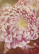 Winter Prints Posters - Chrysanthemum Poster by Elena Nosyreva