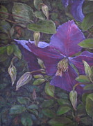 Vine Paintings - Clematis by Stephen Howell