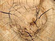 Oak Desk Prints - Closeup Trunk Of Wood With Knots And Cracks Print by Joel Vieira